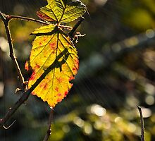 Early Morning Leaf by Mike Honour
