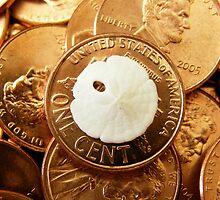 Worlds Smallest Sand Dollar (1180) by Luann Gingras