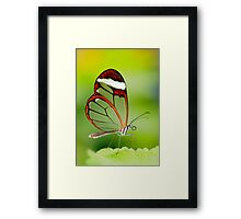 Transparent beauty Framed Print
