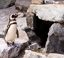 Penguin by Shannon Beauford