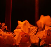 Daffodils by candle light by Melani