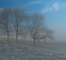 Trees, mist and blue sky by Judi Lion