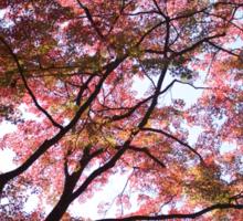 fall foliage Sticker