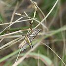 Grasshopper by Jonathan Bartlett