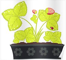Strawberry in Flower Pot Poster