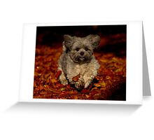 Playful Shih Tzu Greeting Card