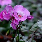 Little Pink Geranium by Lolabud