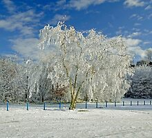 Frosted Trees, Newton Road Park by Rod Johnson