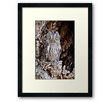 Western Screech Owl Framed Print