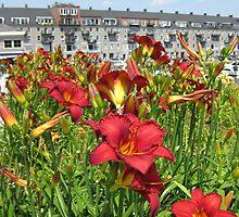Boston Garden by Mmmagdalena