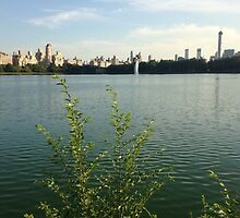 Central Park Resevoir by downtowndesigns