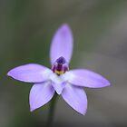 Waxlip Orchid by Mereki