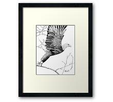 Spreading the ealge's wings Framed Print