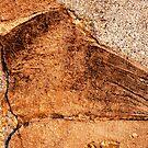 Dinosaur head in stone? by Roz McQuillan