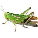 Grasshopper Green by Luci Mahon