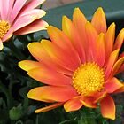Bright and Beautiful - Bella Cape Daisies by BlueMoonRose