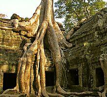 Ancient Tree at Ta Phrom by fatfatin