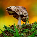 Morning Mushroom... by LjMaxx