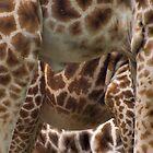 Giraffe Trio by kajo