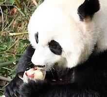 Ice Cool Panda by CBenson