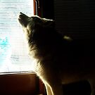 Husky Howling: II  by Rachel Counts
