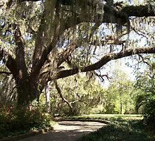 Live Oak by Cathy McGregor