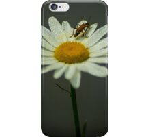 Lightning Bug on a Wet Daisy (1) iPhone Case/Skin