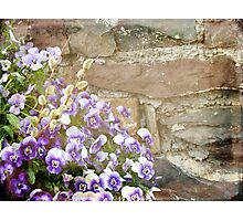 Pansies and Pussywillows Photographic Print