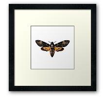Death's-head Hawkmoth Framed Print