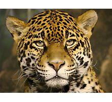 "Jaguar series # 2 - ""Boris looks me over"" Photographic Print"