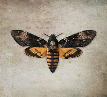 Death's-head Hawkmoth by Matthew Hollinshead