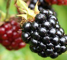 blackberry by Cornelia Togea