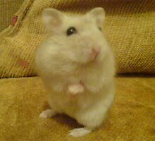 hamster model by Bojan