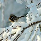 Snow Play by Paul Gitto