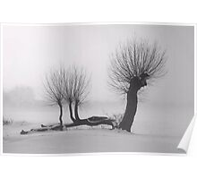 Weeping winter willow Poster