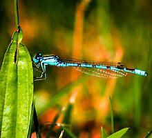 Damsel Fly by Trevor Patterson