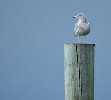 seagull against ominous skies by Robyn Bohlen