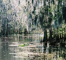 Lake Okeechobee Spanish Moss by TurnerJ