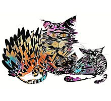 Three colored cats Photographic Print