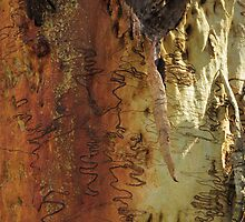 Rusty Old Scribbly Gum by CapturedByKylie