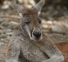 Kangaroo 1 by SimplyMoose
