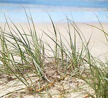 beach grasses by dbax