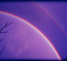 How many rainbowz... by dimarie