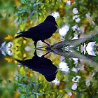 Crow Reflected by shalisa