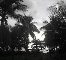 Palm View by fjudge