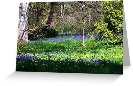 Bluebell Wood by Trevor Kersley