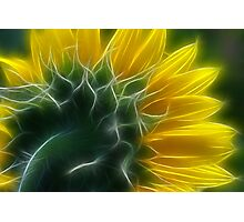 Golden Delight Photographic Print