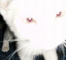 Ghost Cat by Rebecca Krawczyk