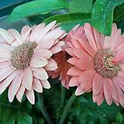 My Minnesota Blooms by Diane Trummer Sullivan