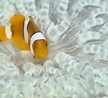 Nemo Bleached by gardenofbeeden